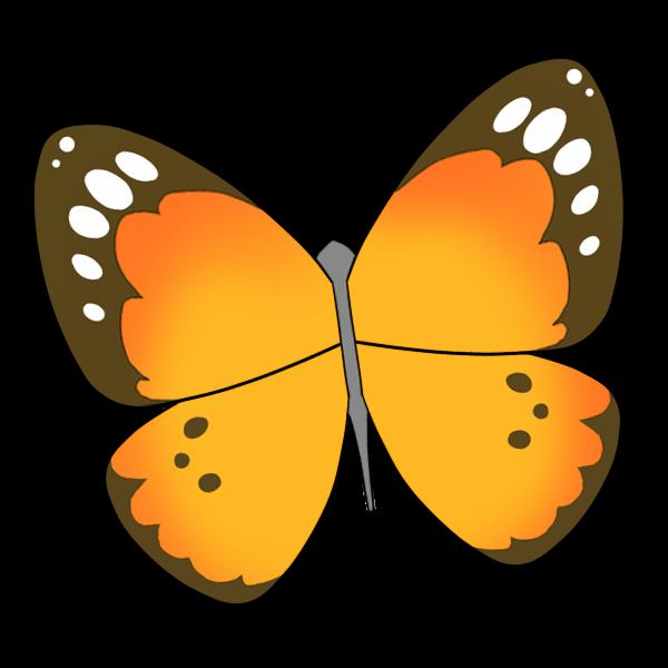 蝶(オレンジ)