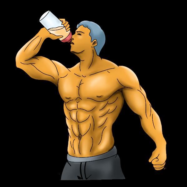プロテインは筋肉の素