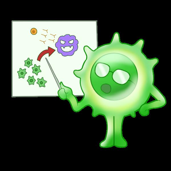 ヘルパーT細胞
